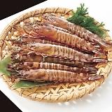 車海老 神籠の眠り(10尾)